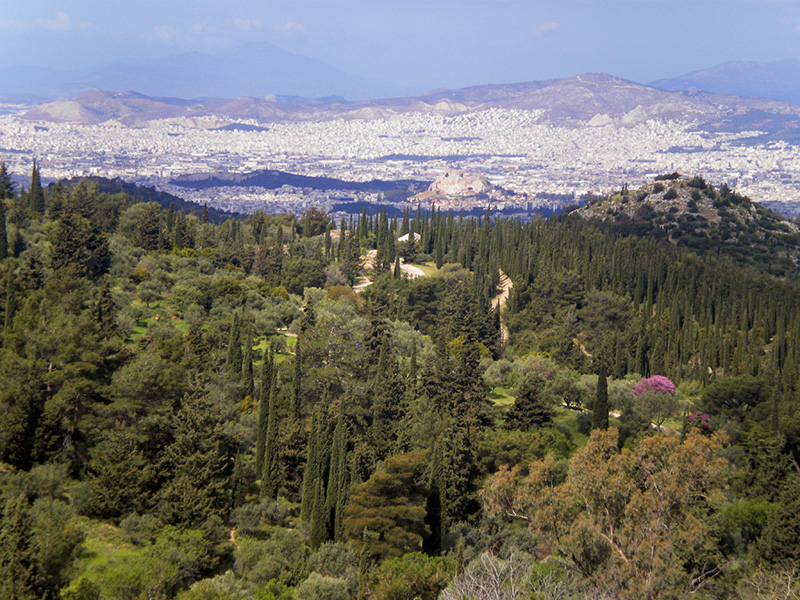 δάσος καισαριανής dasos kaisariani