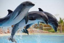 attiko parko delfinia